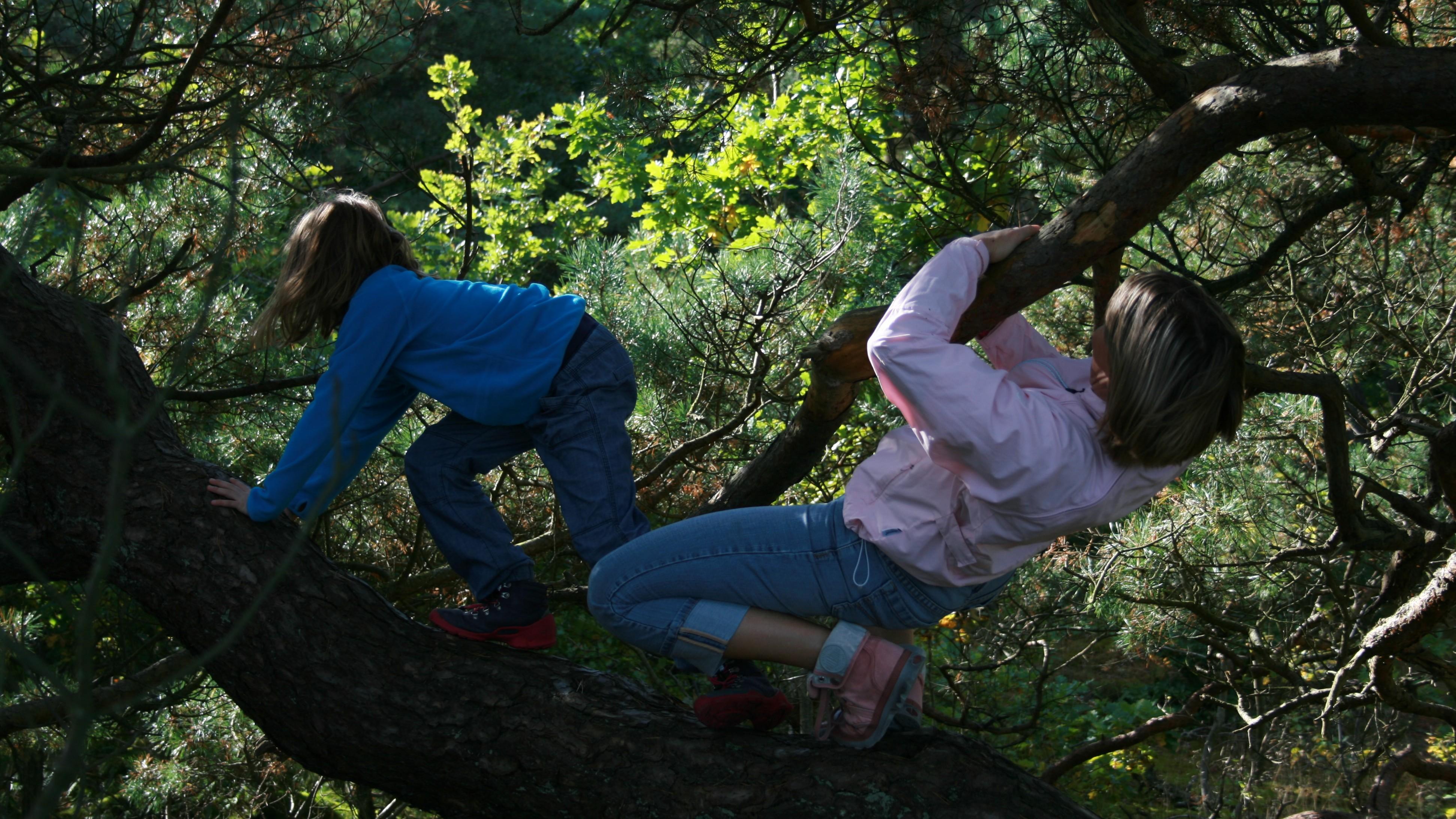 Klatre i træer